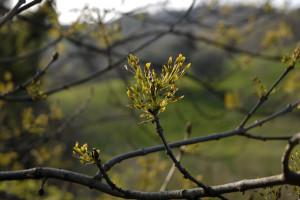 CEA centro educazione ambientale l'arboreto germoglio