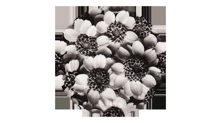 La bellezza (o dell'inverosimile) laboratorio condotto da Raffaella Giordano